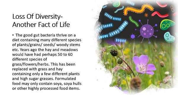 bacteria and flowers.JPG