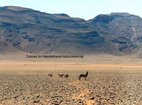 Zebra1_beschriftet.jpg