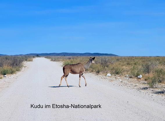 Kudu_beschriftet.jpg
