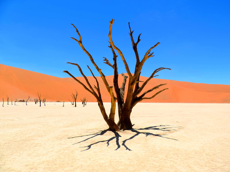 Der Tote Wald in Deadvlei
