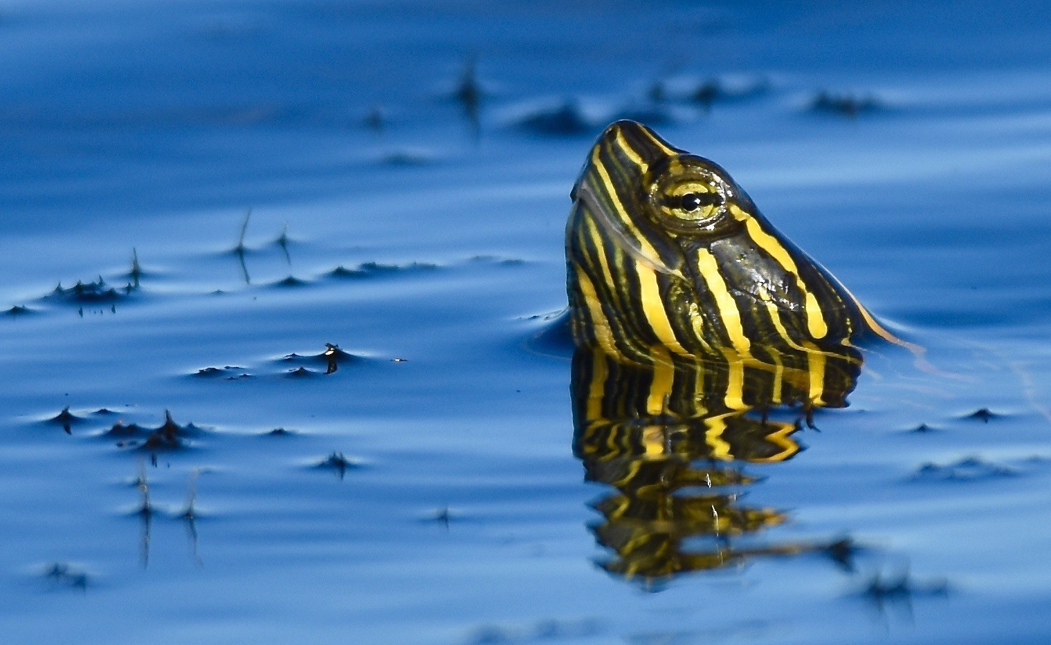 Turtle reflection on my birthday good lu