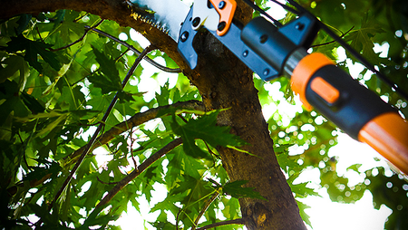 5 Benefits to Pruning Your Trees Regularly.