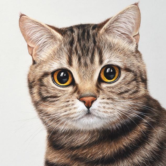 Cat 18x24 2017.jpg