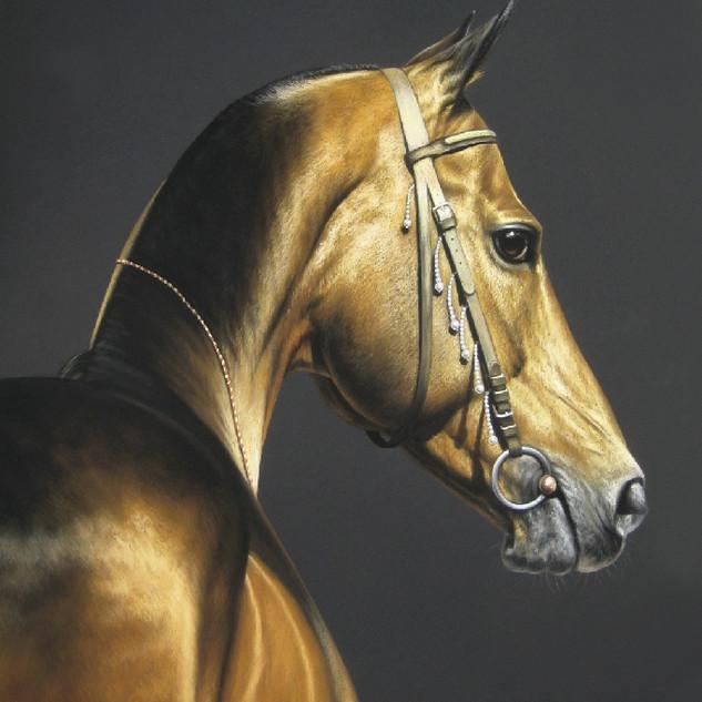 Golden Akhal-teke 50x60 2010.jpg