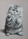 котенок просит.jpg