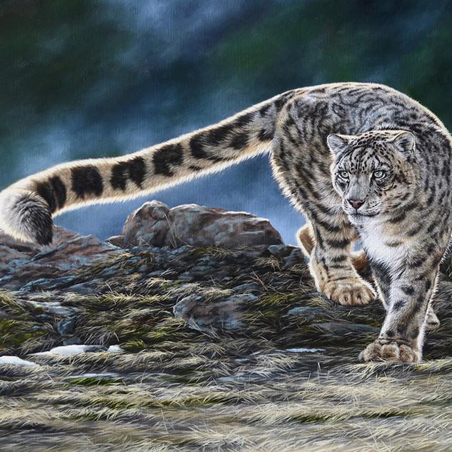 Snow leopard 50x65 2019.jpg