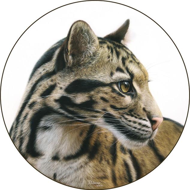 Cloud leopard 33x33.jpg