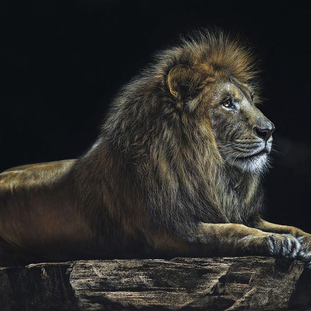 lion king 50x65 2018.jpg