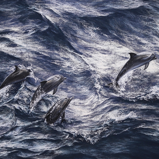Dolphins 49x67.jpg