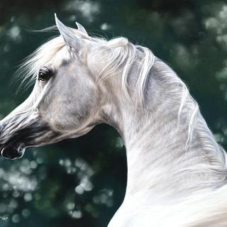 Arabian tender 35x45.jpg