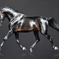 шелковый конь2.jpg