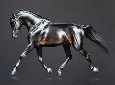 Шелковый конь.jpg