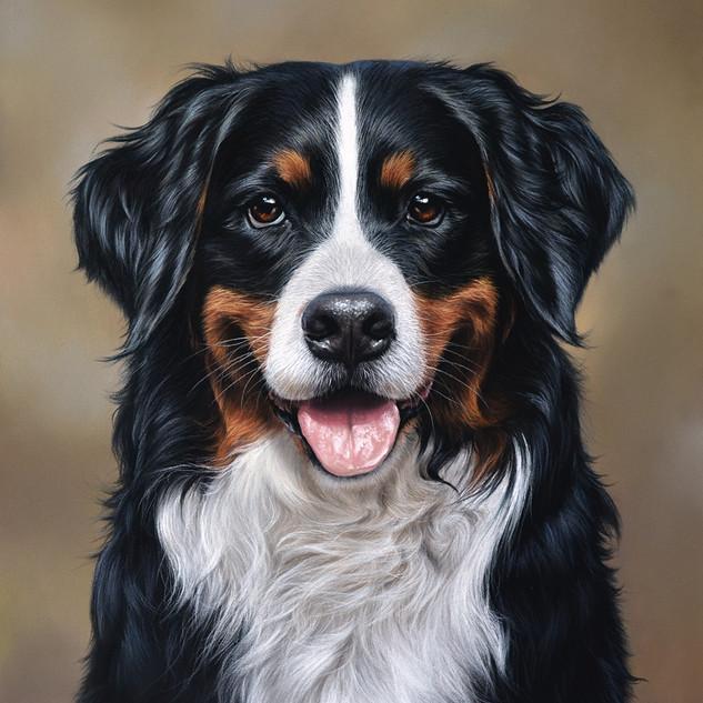 Zennenhund 28x34 2017.jpg