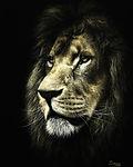 Портрет льва.jpg