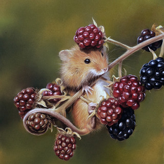 Mouse with blackberry.jpg