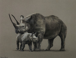 Черные носороги