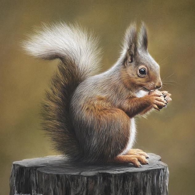Squirrel with nut 24x26 2017.jpg
