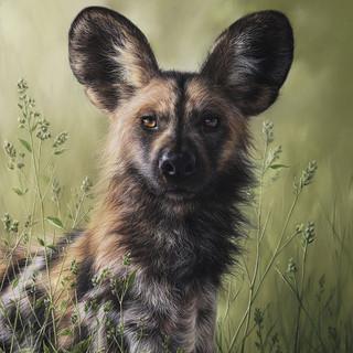 Painted dog 46x39.jpg