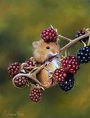 Мышка с ежевикой.jpg