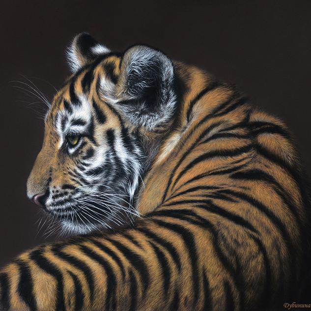 Little tiger 40x50 2018.jpg