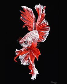 рыбка.jpg