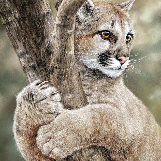 Puma 30x40 2017.jpg