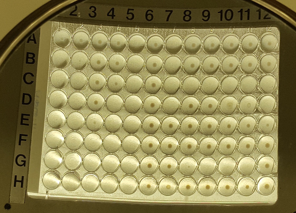 Broth micro-dilution plate (Sensititre) for antimicrobial susceptibility testing