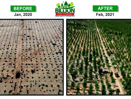 Projeto de reflorestamento transforma deserto no Paquistão