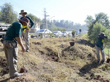 Marginal do Rio Jundiaí ganha 150 mudas de árvores
