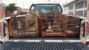 Homem é multado por manter aves silvestres em gaiolas