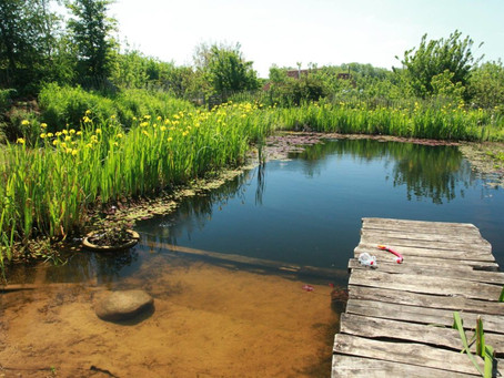 Entenda como são feitas as piscinas biológicas que substituem cloro por plantas