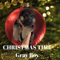 Gray Collar Boy_Week 4.png