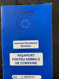gino passport.JPG