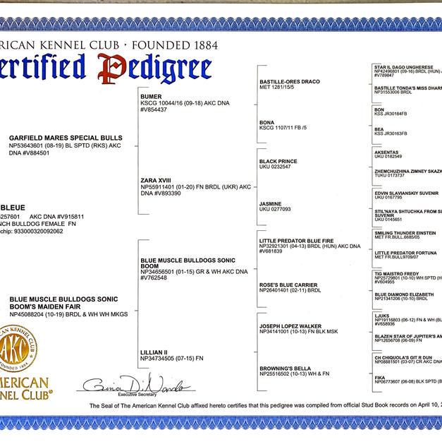 Lune Bleu's Certified Pedigree