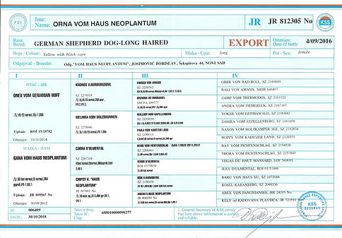 EXPORT PEDIGREE ORNA.jpg