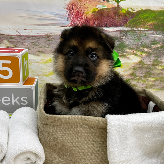 green Boy @ 5 Weeks.jpg