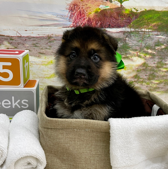 green Boy _ 5 Weeks.jpg