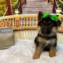 Green Boy at 7 Weeks