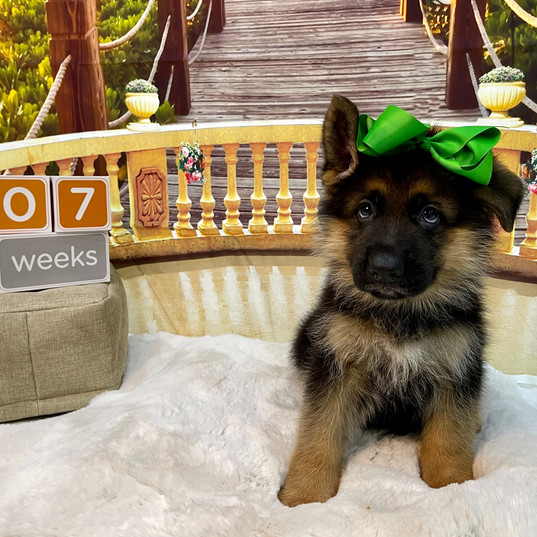 Green Boy at 7 Weeks
