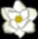 Redrawn_Magnolia.png