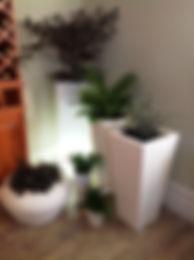 White Pots.JPG