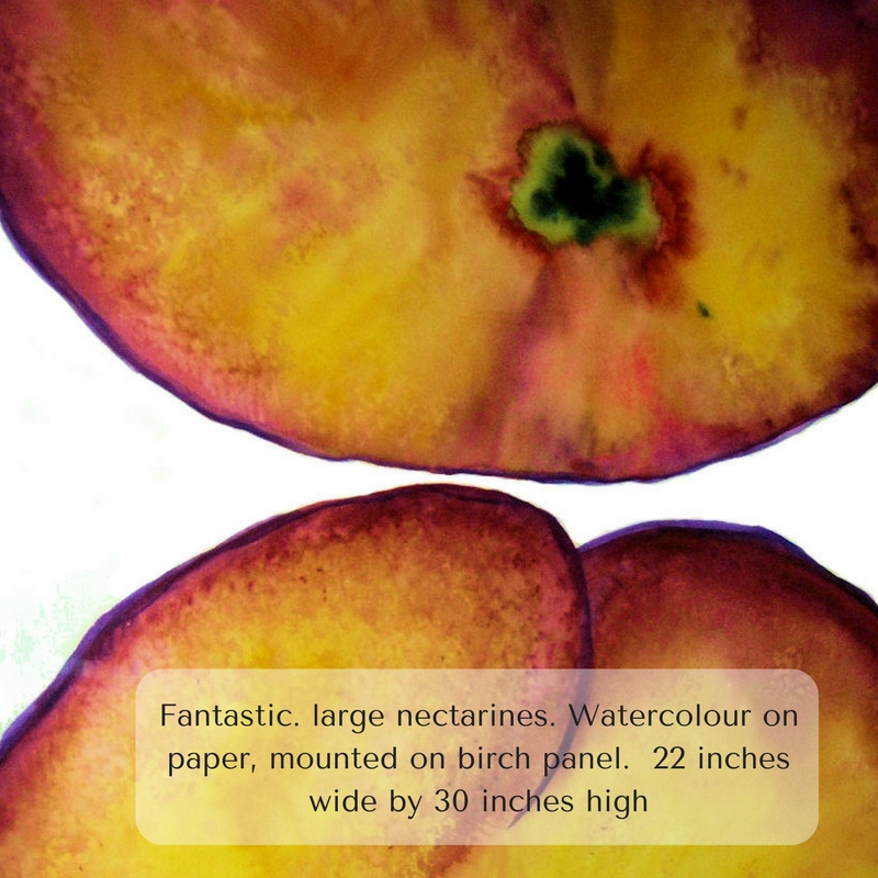 Fantastic. large nectarines. Watercolour on paper, mounted on birch panel. 22 inches wide by 30 inch