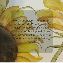 More Sunflowers! All is bright in the world. 12 inches by 12 inches. Watercolour on paper, mounted o