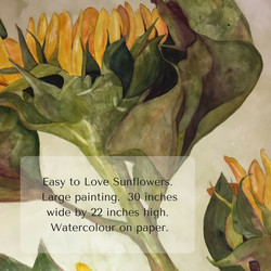 Easy to Love Sunflowers. Large painting. 30 inches wide by 22 inches high. Watercolour on paper.