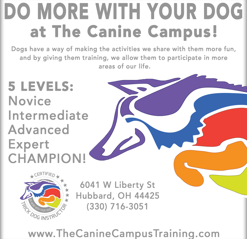 Do More With Your Dog at The Canine Campus in Hubbard, Ohio!