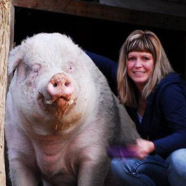 big piggy.jpeg