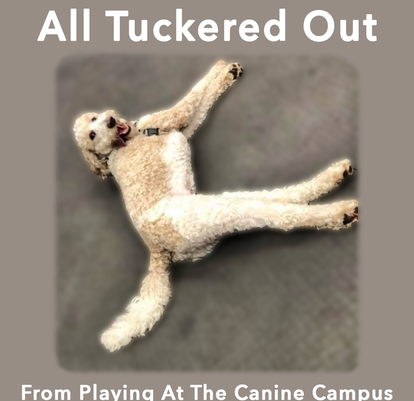 Does your dog need more exercise? More playtime? Bring them to The Canine Campus in Hubbard and Howland, Ohio
