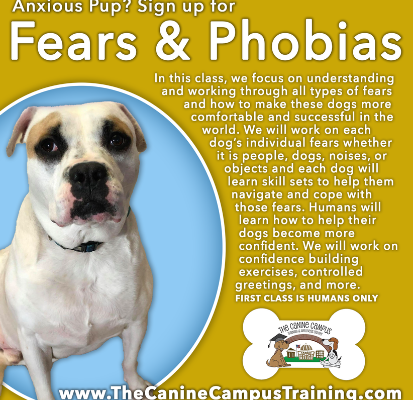 If you have an anxious dog, consider signing up for our Fears & Phobias classes at The Canine Campus - located in Hubbard and Howland, Ohio.