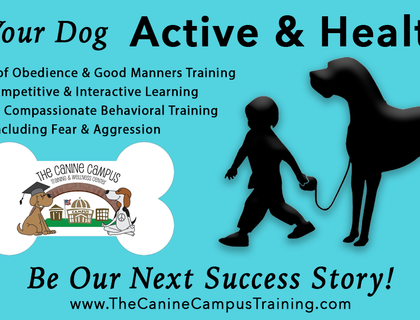 Keep your dog active and healthy with classes at The Canine Campus, located in Hubbard and Howland, Ohio!