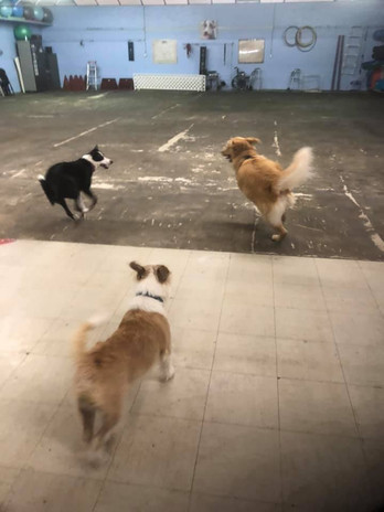 Daycare at The Canine Campus